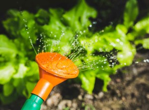 Water saving systems in the garden