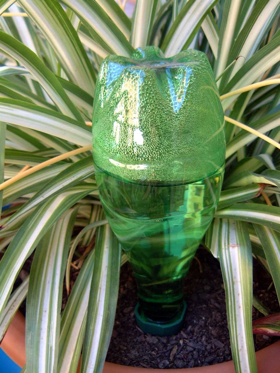 Watering spike in container with recycled plastic bottle