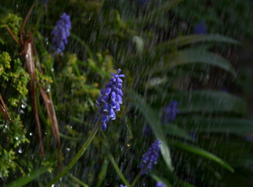 Rain gardens water conservation landscapes watering my for Water saving garden designs